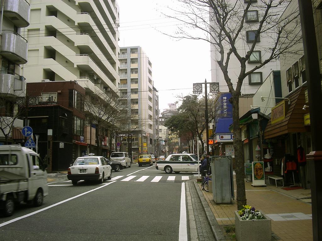 関内吉田町の街路樹