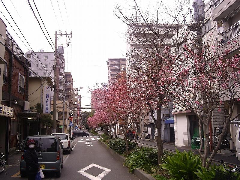 中区永楽町の桜・モモ